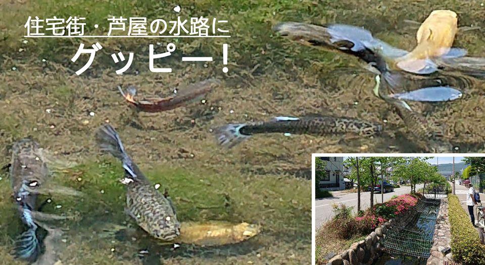 jpashiyagupp